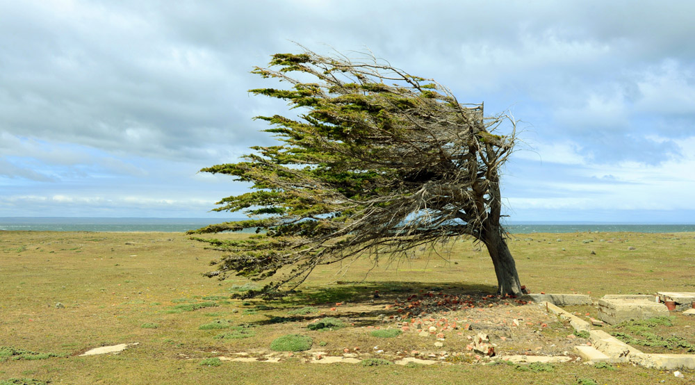 Building inner strength - a tree growing against the wind